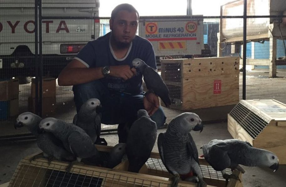Exotic 2016 Falcons and Owl ,hyacinth macaws and african grey parrots available for sale.