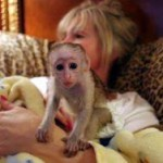 adorable capuchin and marmoset  for adoption