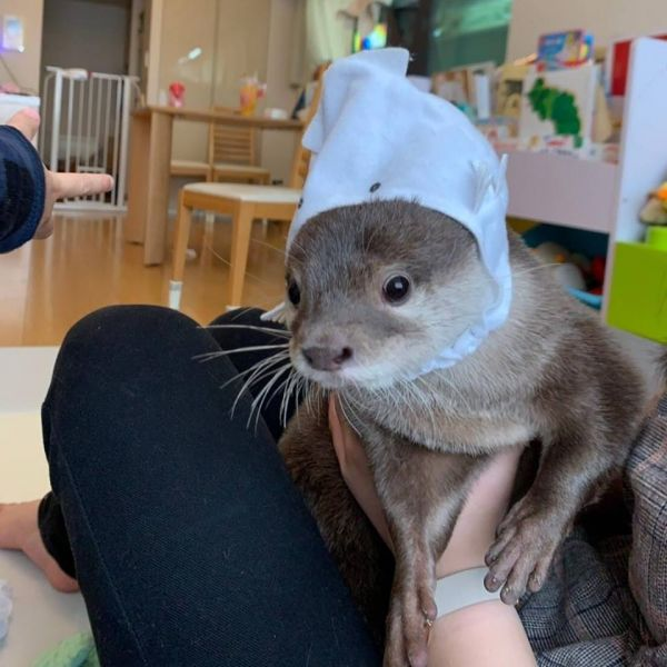 ASIAN SMALL CLAWED OTTERS FOR SALE TEXT OR CALL(601) 675-2405‬