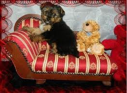 HEALTHY CUTE MALE AND FEMALE YORKIE PUPPIES FOR ADOPTION