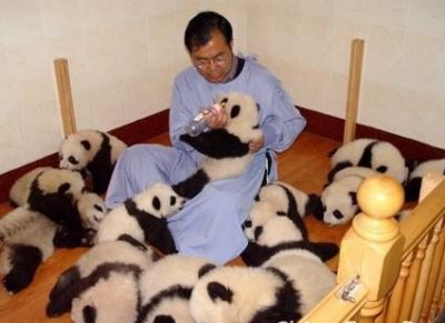 Baby Pandas For sale
