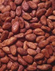Mature Dried Flaour High Quality Cocoa Bean for Sale