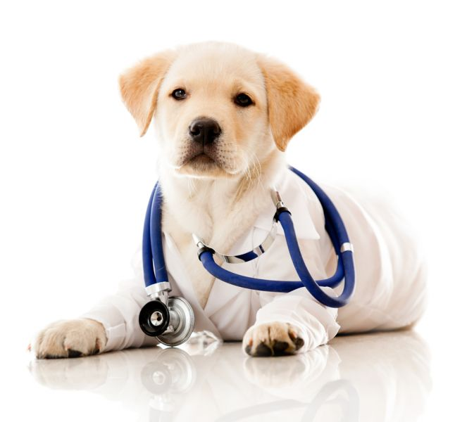 Animal Hospital in Houston