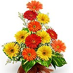 Flowers to stud your celebration fiesta