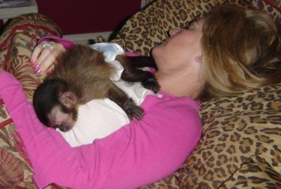 Baby Chimps,Capuchin,Lemurs & Marmoset Monkeys