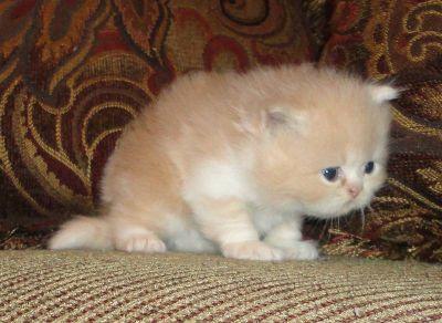 kittens for adopt