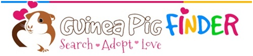 Looking to Adopt a Guinea Pig?