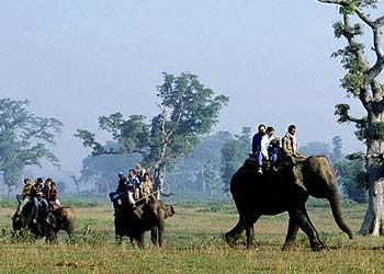 Elephant Safari Tour The joy of enthralling