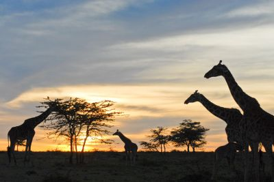 Adventurous camping safari and africa safari tours