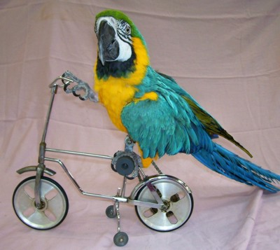 We are parrot breeders of high quality talkative breeds