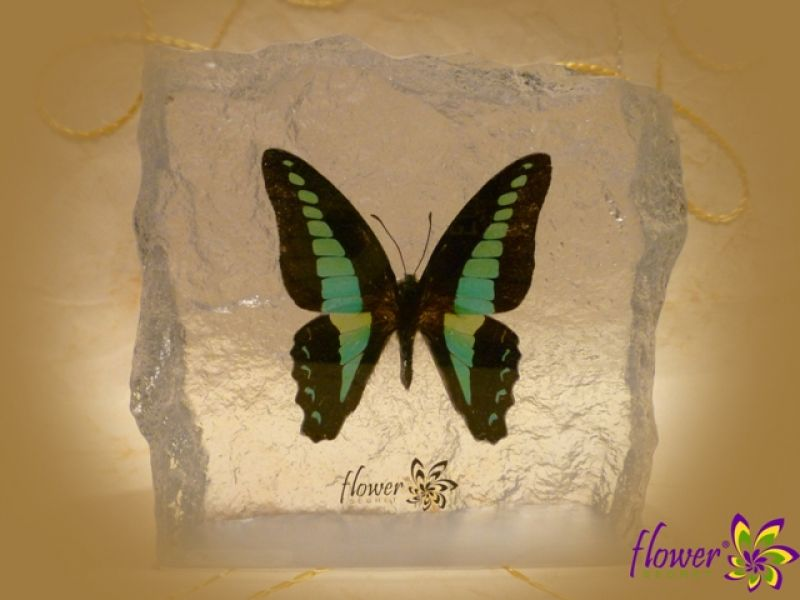 Get Real Butterfly in Resin at Flower-Secret