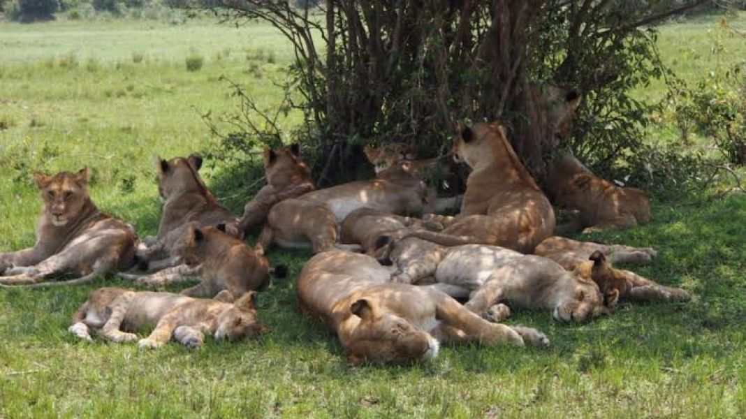 Kenya flying safari packages