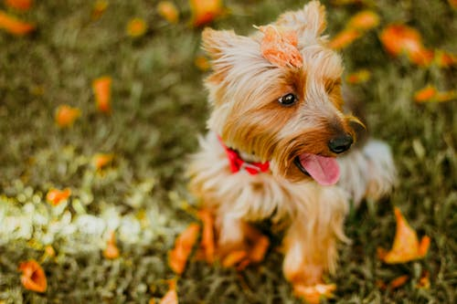 Pet Waste Removal Services In Topeka