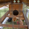 Belfry Mobile Backyard Chicken Coop